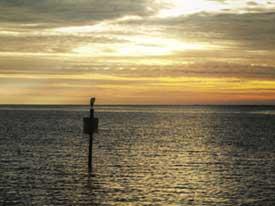 National Wildlife Federation Gulf Oil Spill Restoration Fund